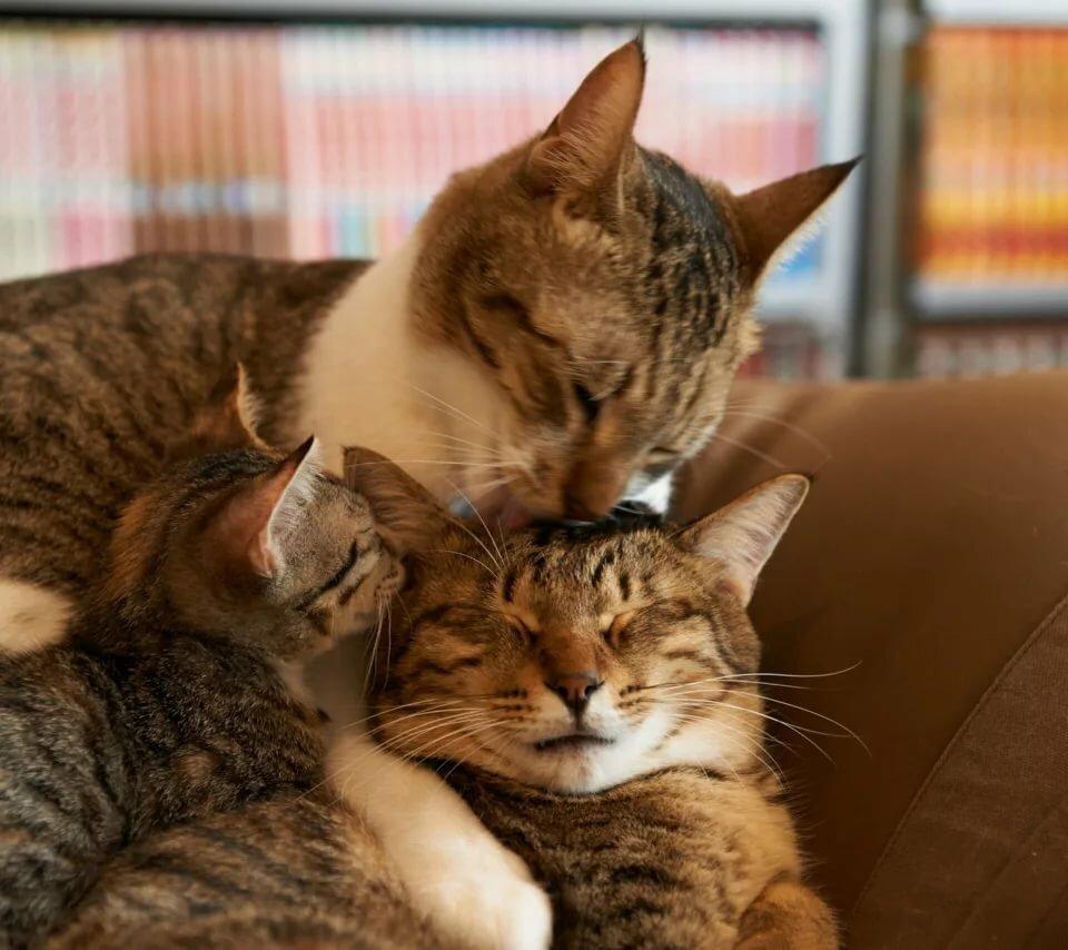 сконцентрировано картинки с семьями котов всем этим