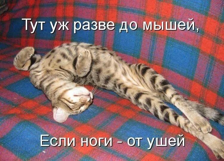 Картинки с надписями про кошку, открытка днем рождения