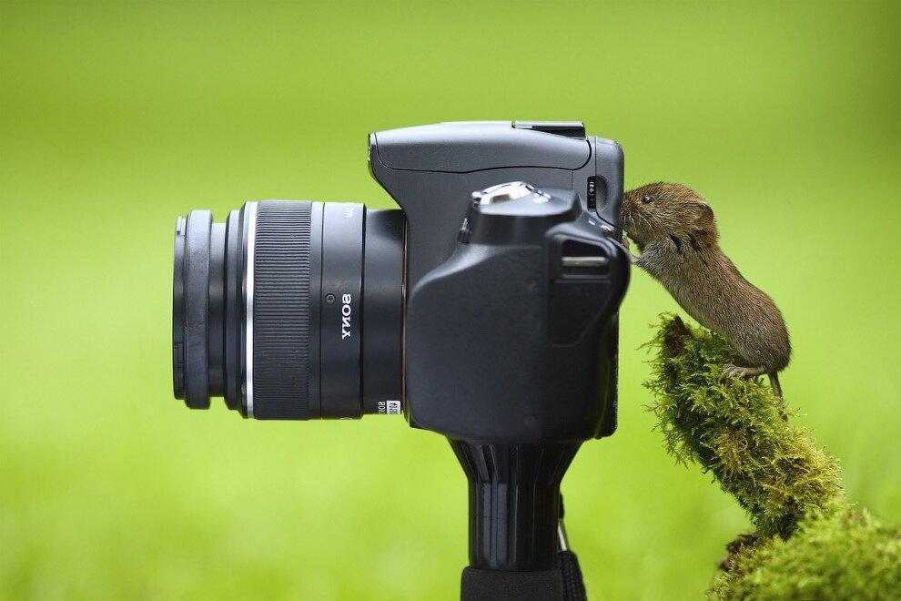 Фотоаппарат картинки прикольные