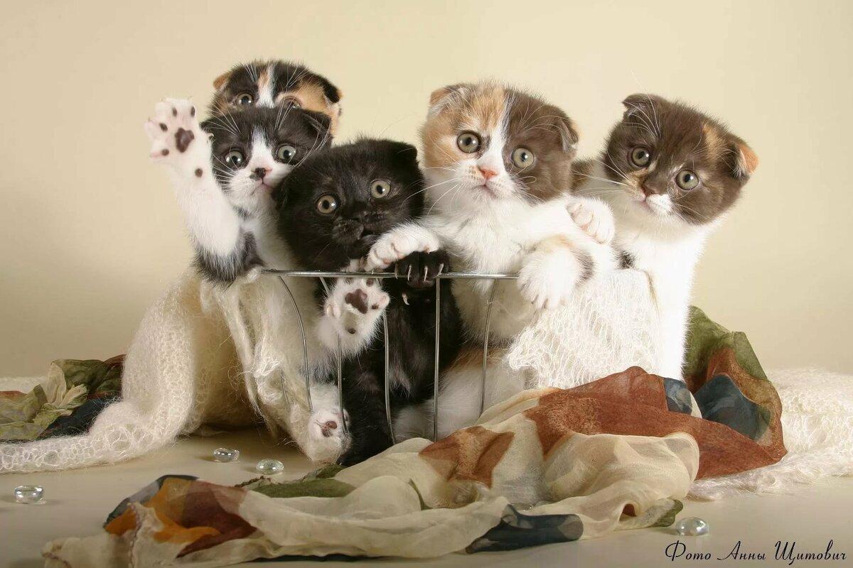 Картинки с котами и котятами приколы, картинки