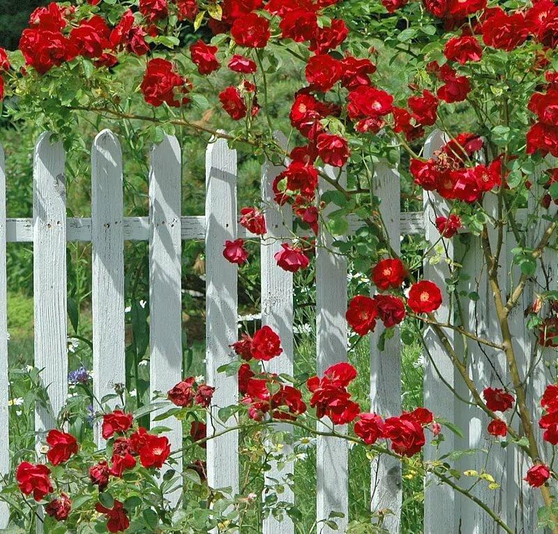 картинки из цветов на забор как приеду, учится