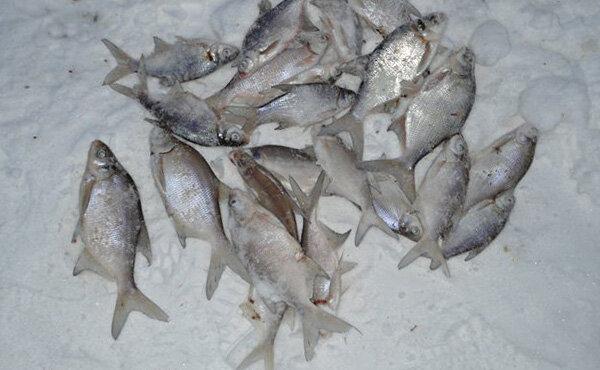 Истринское водохранилище рыбалка зимняя