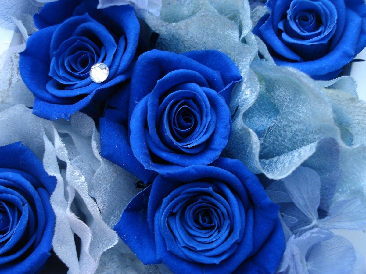 Открытки, открытка с синими розами
