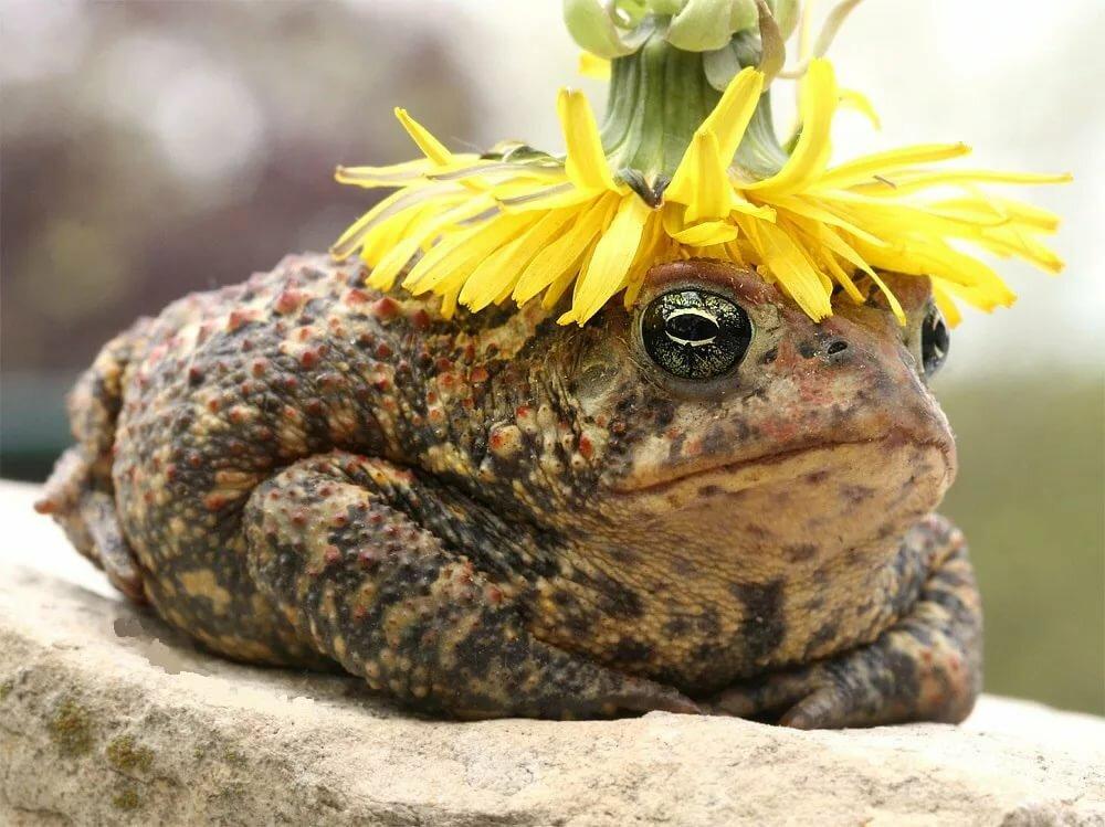 Маме, прикольные картинки лягушки жабы это