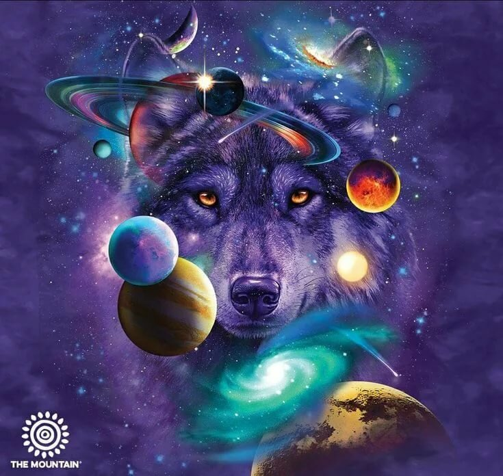 картинки животных в космосе ботильоны