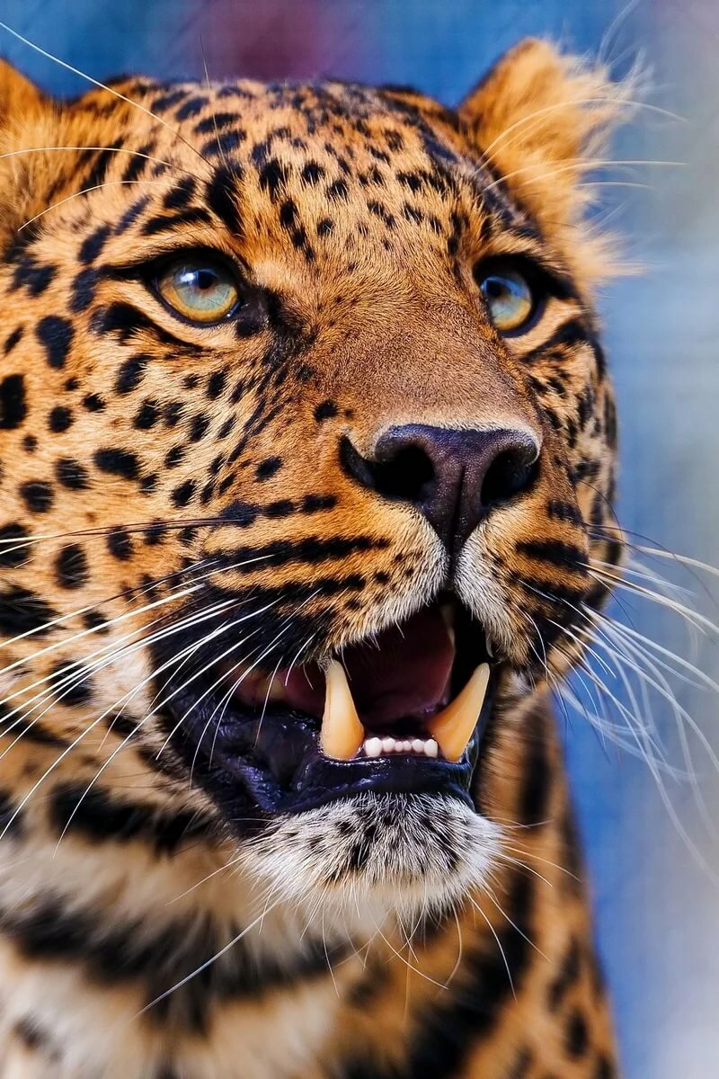 Февраля живая, на андроид картинки на заставку животные