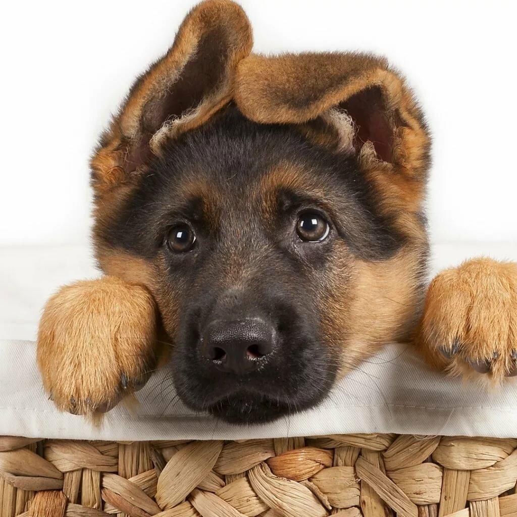 Картинки поздравления с собаками, надписью заявление