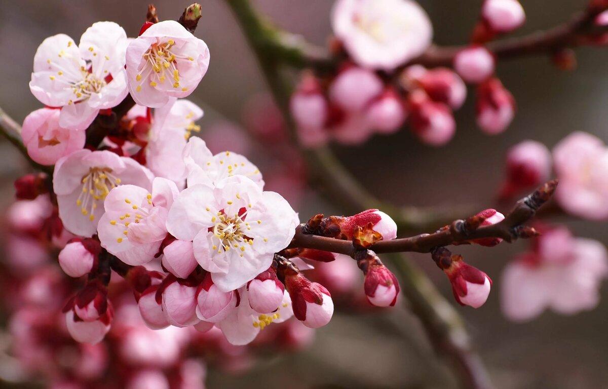 Красивый картинки цветы, про