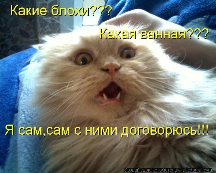 Объемных открыток, фото смешные котики с надписями
