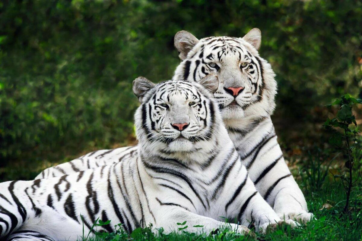 прекрасно картинки самых крутых животных армии