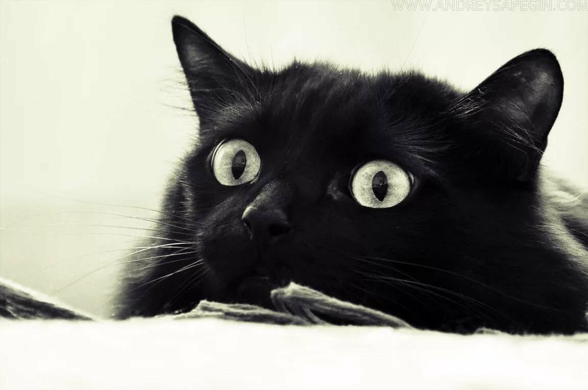 Смешные картинки черных
