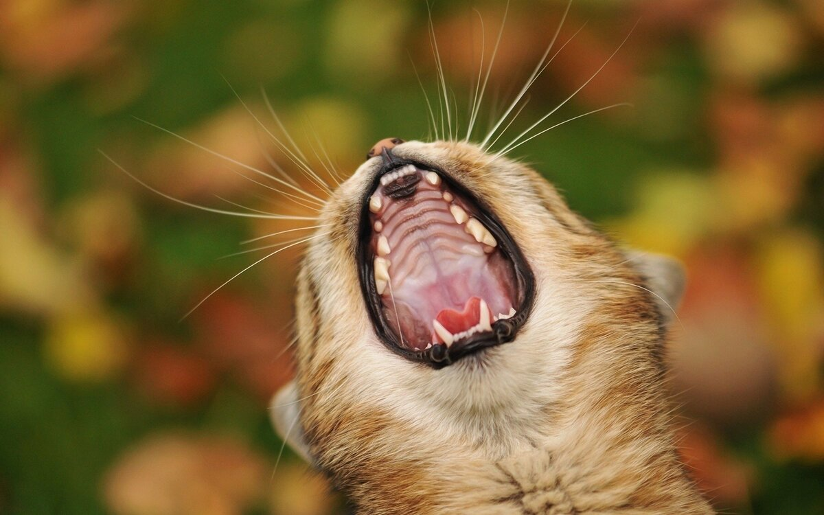 Смешные истории с животными картинки