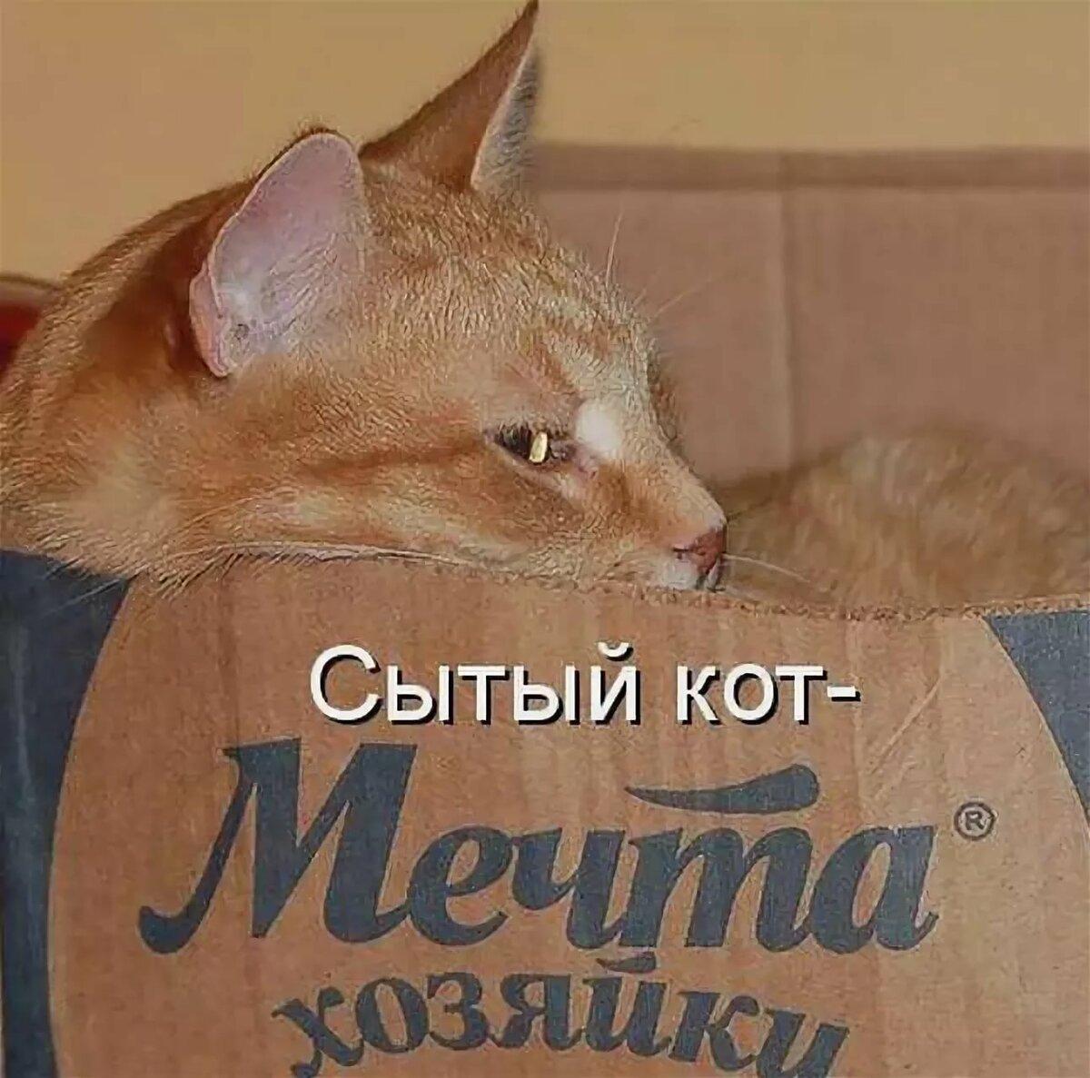 Заставки, картинки смешные коты с надписями