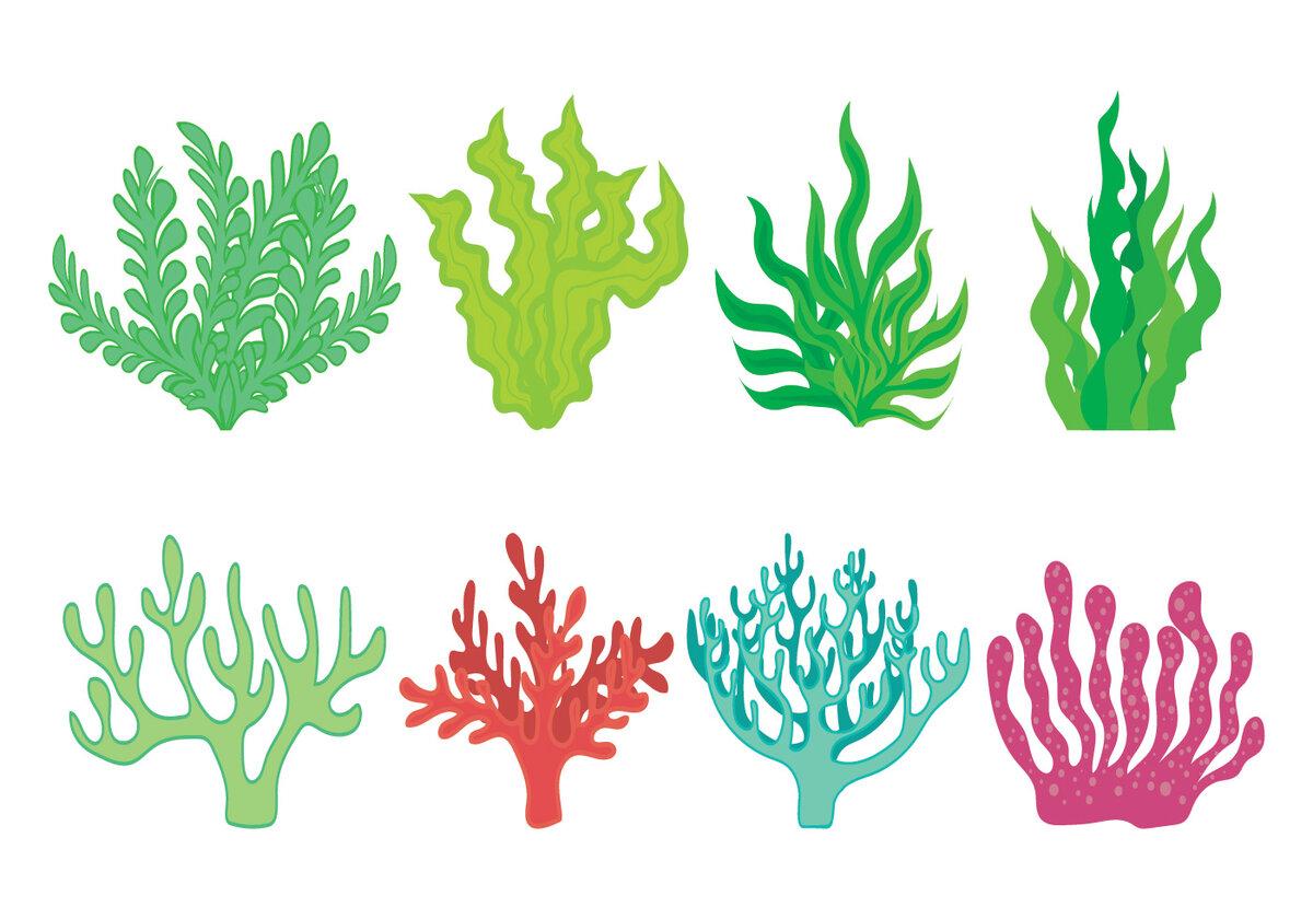 Картинки кораллы водоросли морские камни рисунки