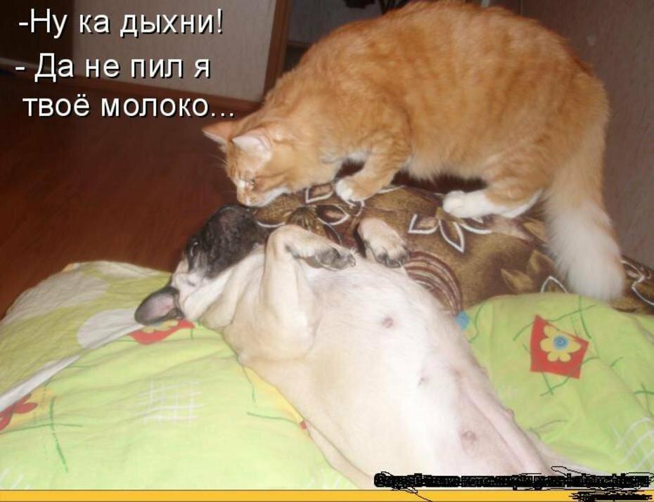 Картинки смешные про котов и собак с надписями смешные до слез, приветик