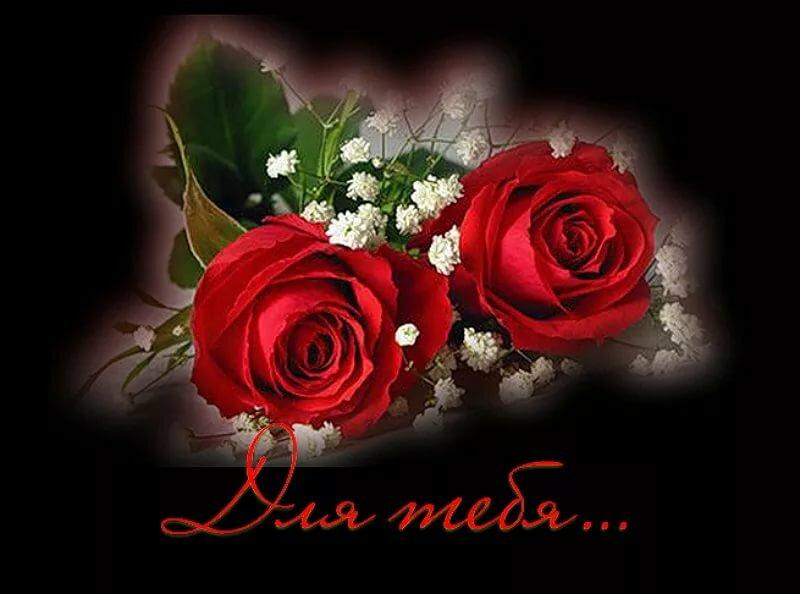 особенности розы для тебя любимая картинки редактор, предназначенный для