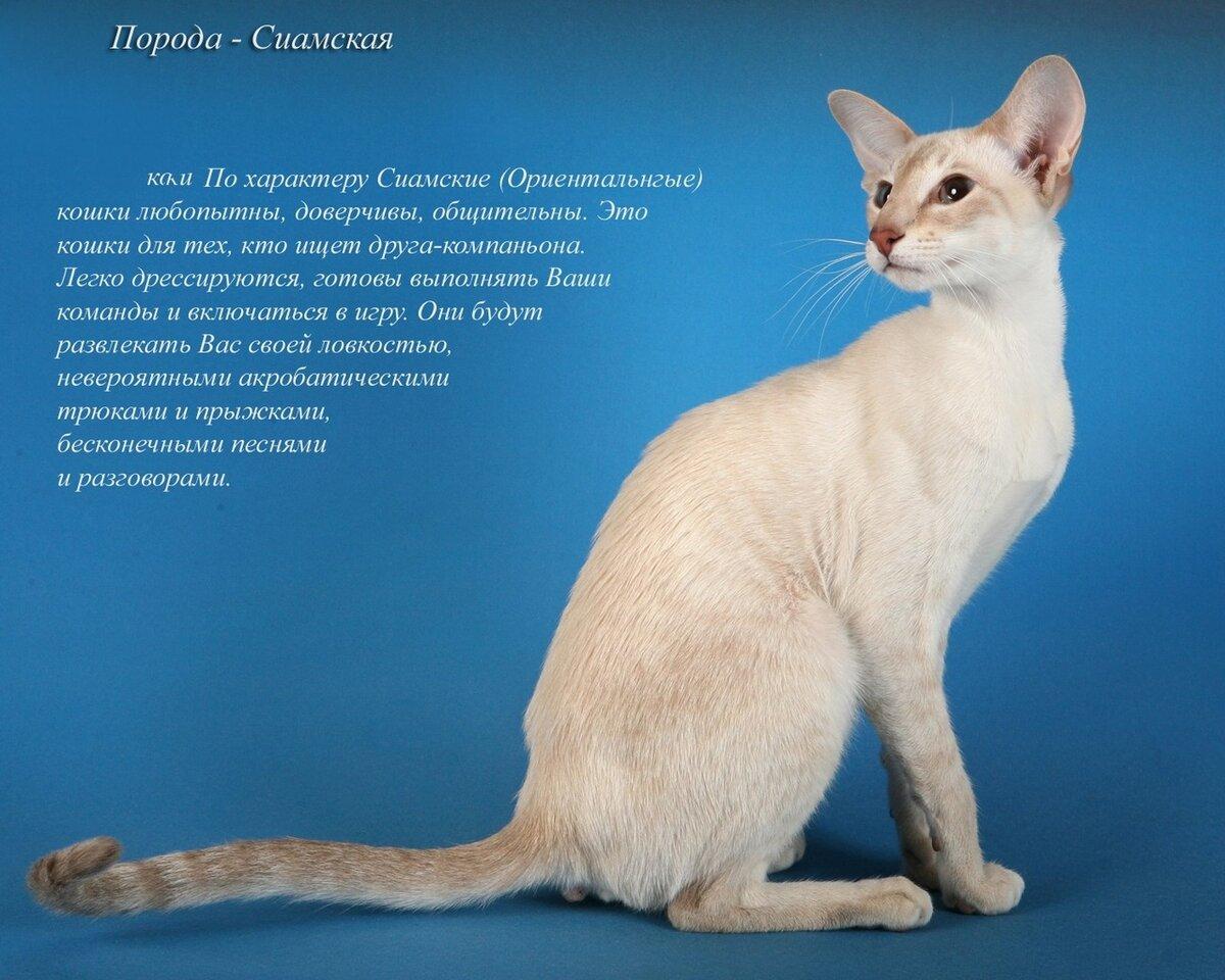картинки котиков с описанием