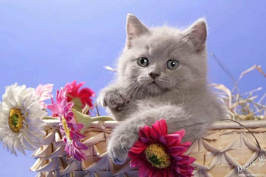 Картинки коты хорошего дня