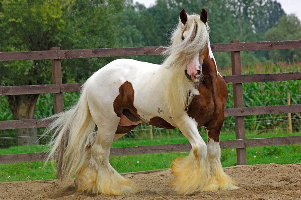 Открытки день, лошади фото красивые картинки с надписями какая порода