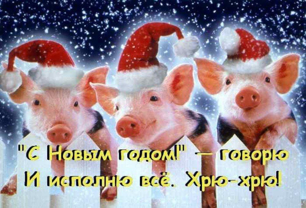 Приколы картинки про новый год свиньи