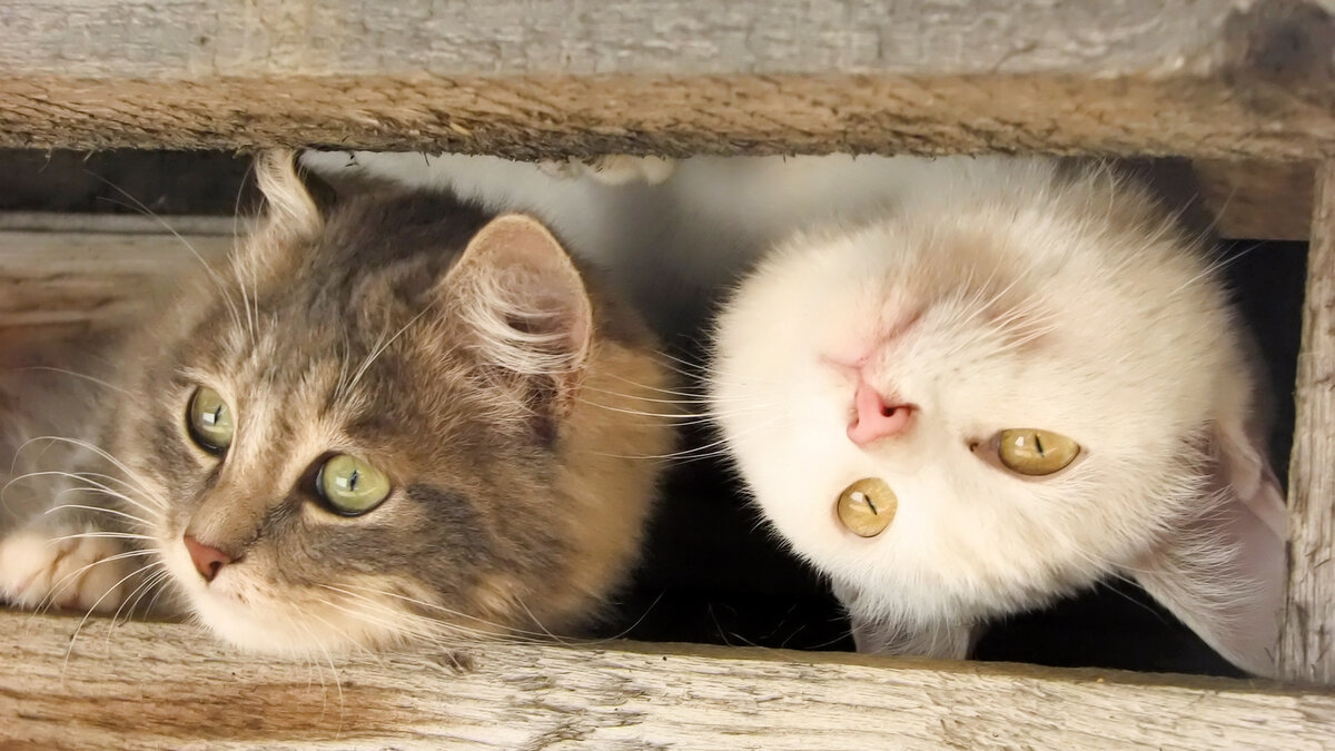 Открытки, фотки смешных кошек и котят