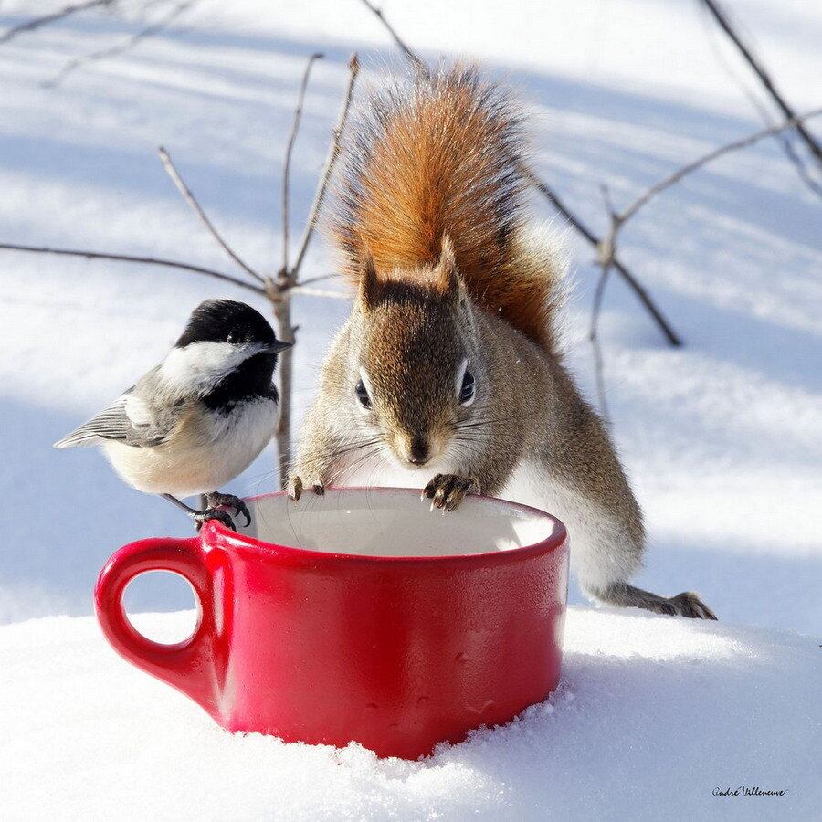 Днем, доброе утро с птицами веселые картинки