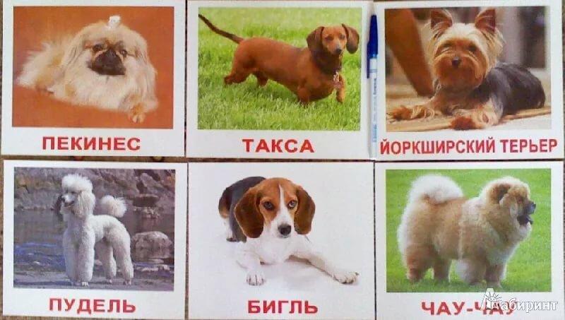 Картинки, картинка с надписью породы собак