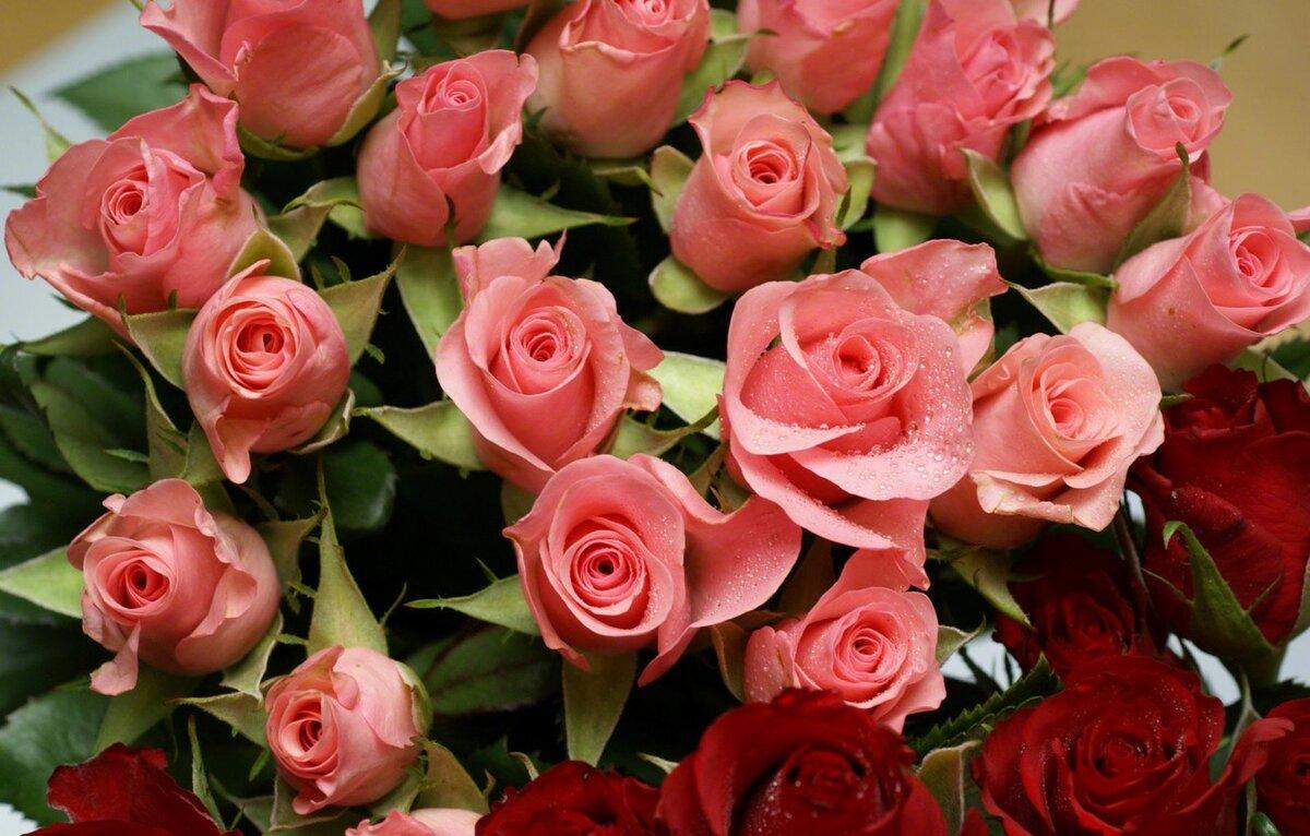 Друзей картинки, картинки самые красивые цветы розы