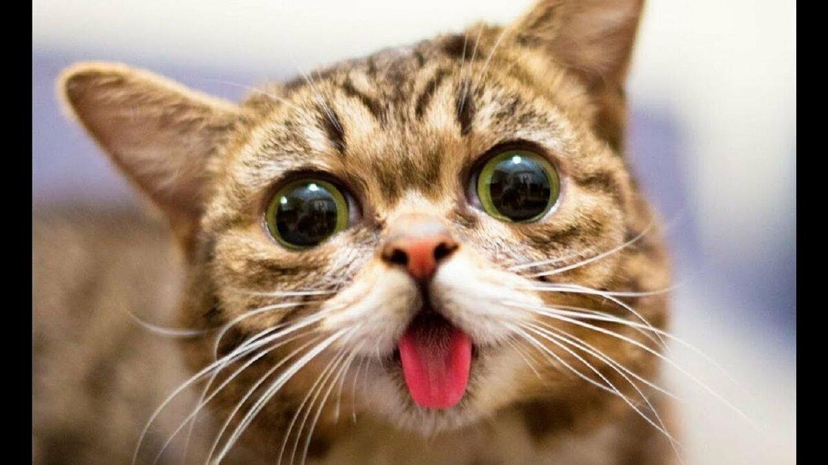 Смешные котики смотреть, открытка доброго вечера