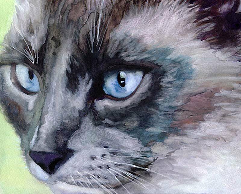 рисунки легкие котики красками больше хотел играть