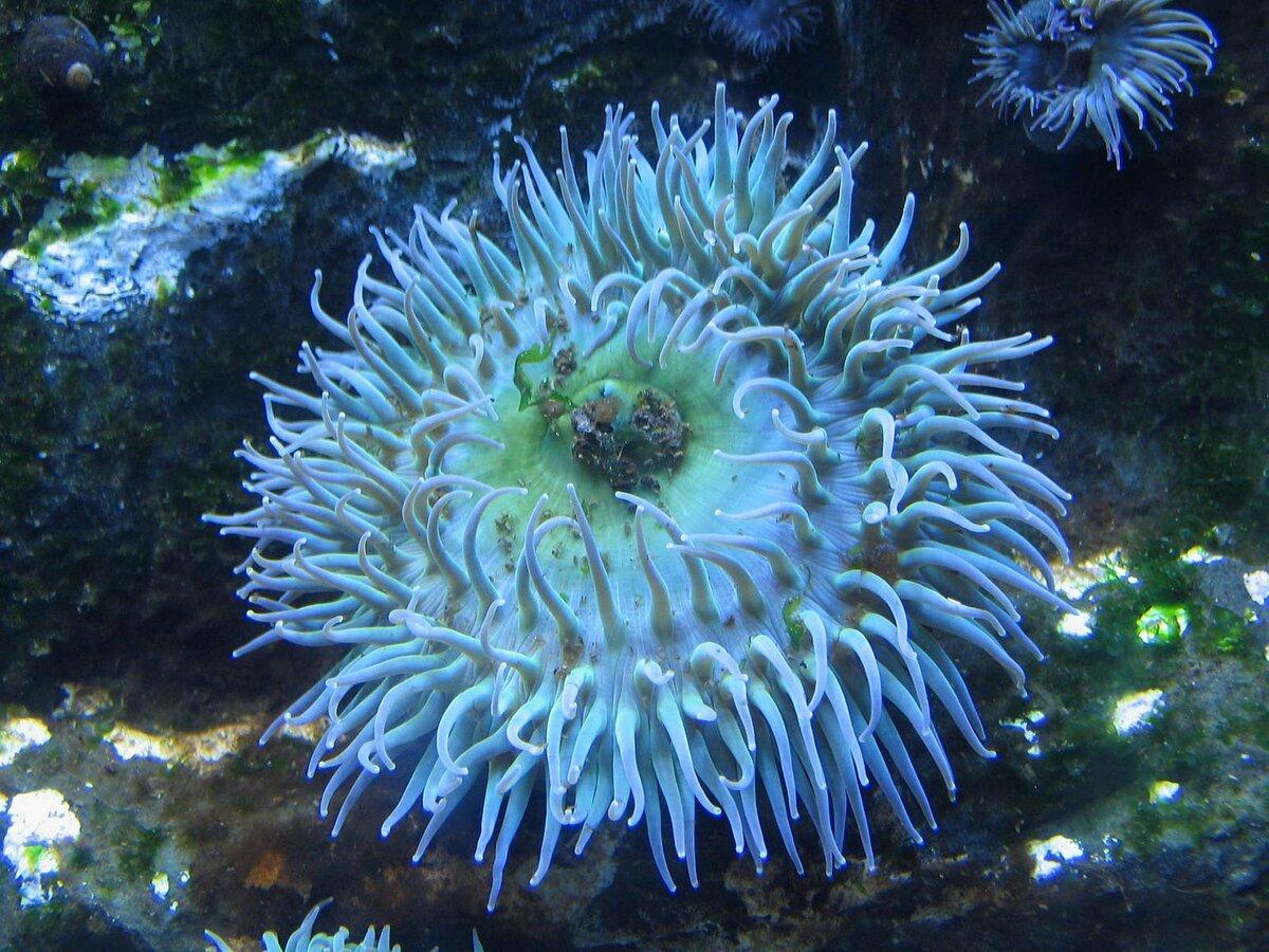 морские растения с картинками комплект формы