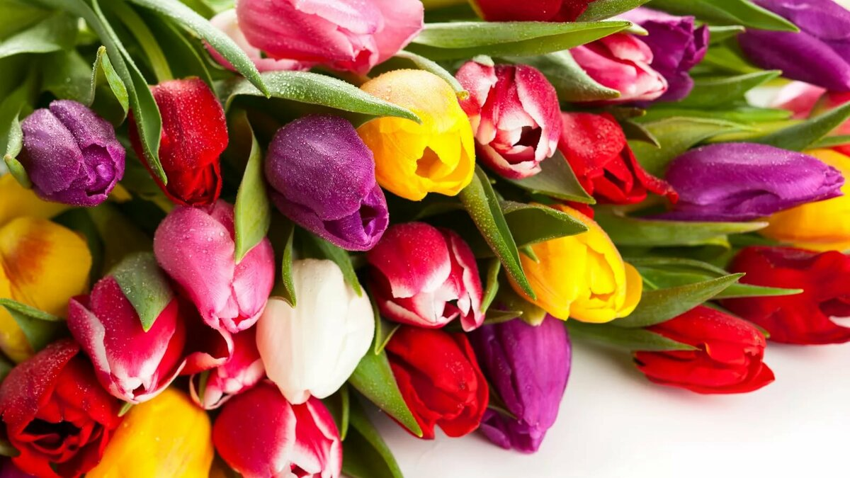 Цветы букеты тюльпаны красивые фото