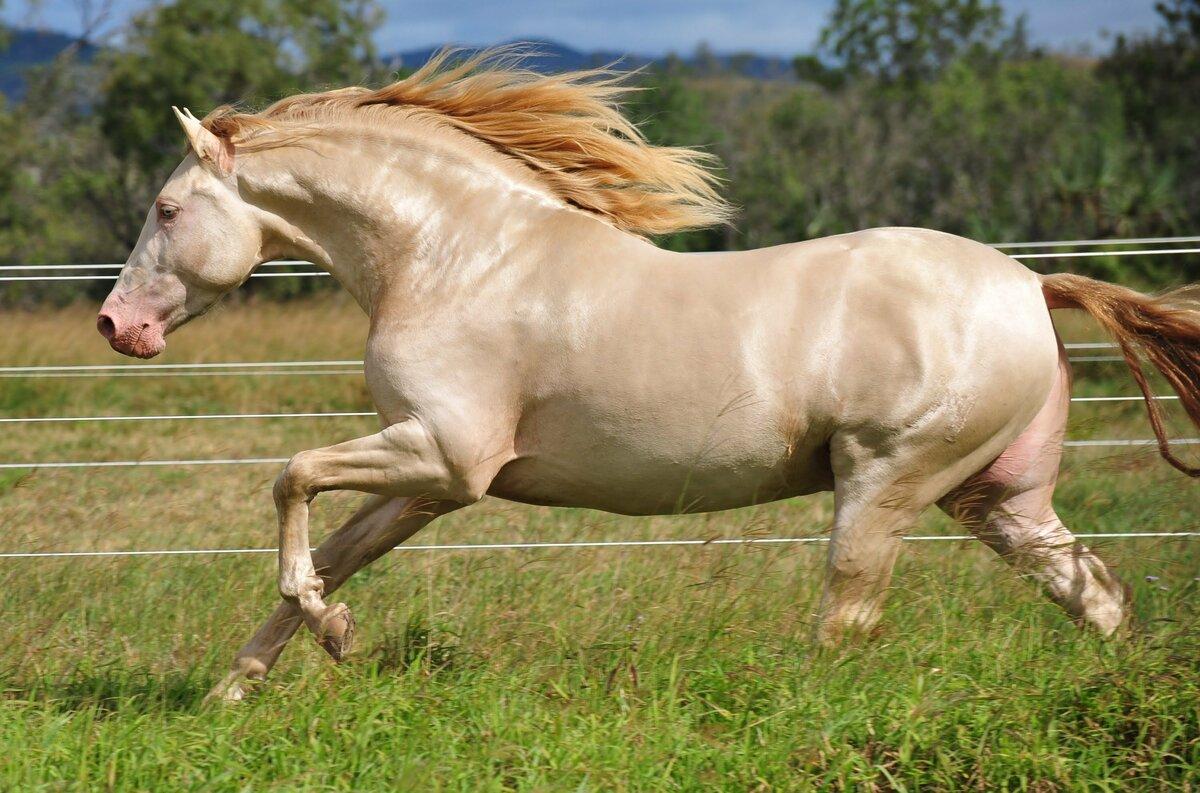 Поздравление, лошади фото красивые картинки с надписями какая порода