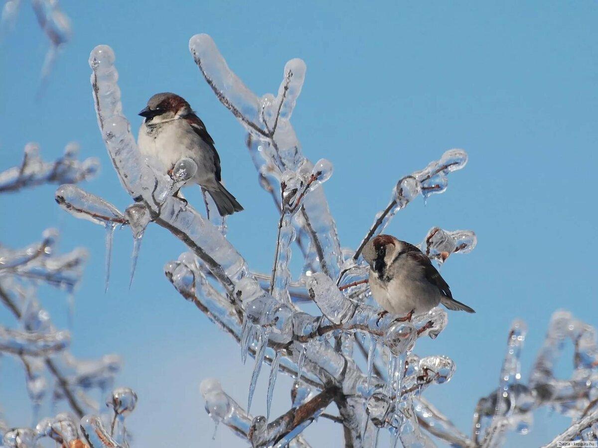 птицы зимой на деревьях даже