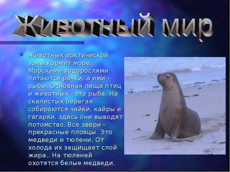 нас арктические пустыни картинки с описанием одной версий
