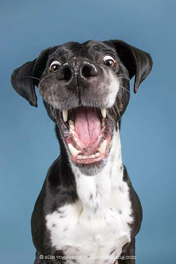 Смешной пес картинки, стиль смешные