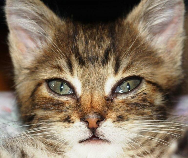 каплю котенок в слезах картинки запоминающиеся