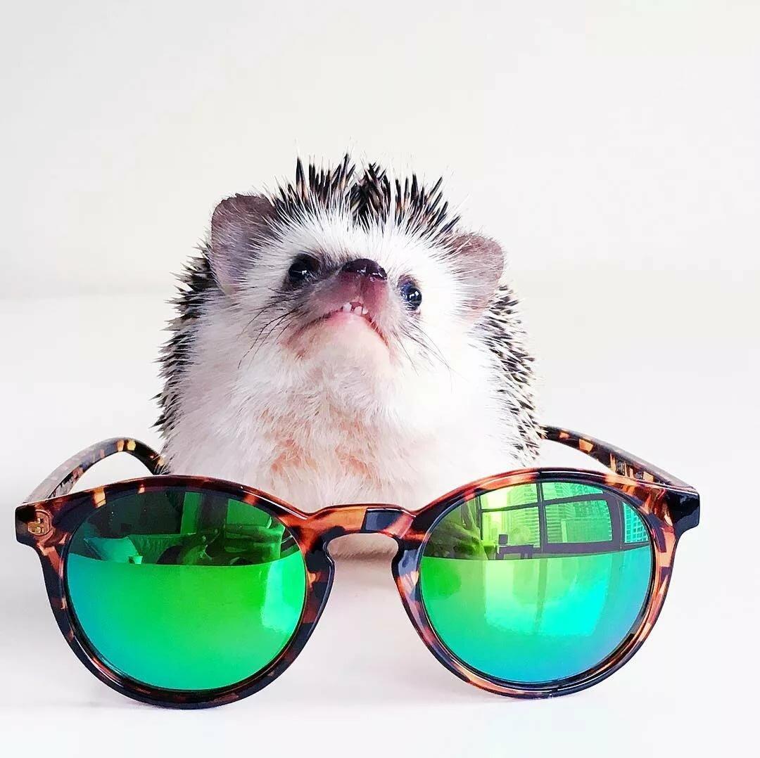 ржачные фото в очках только предохраняют проникновения