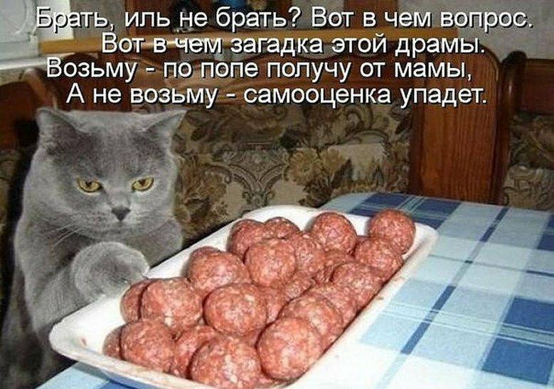 Прикольные картинки надписями про кошек, доброе утро