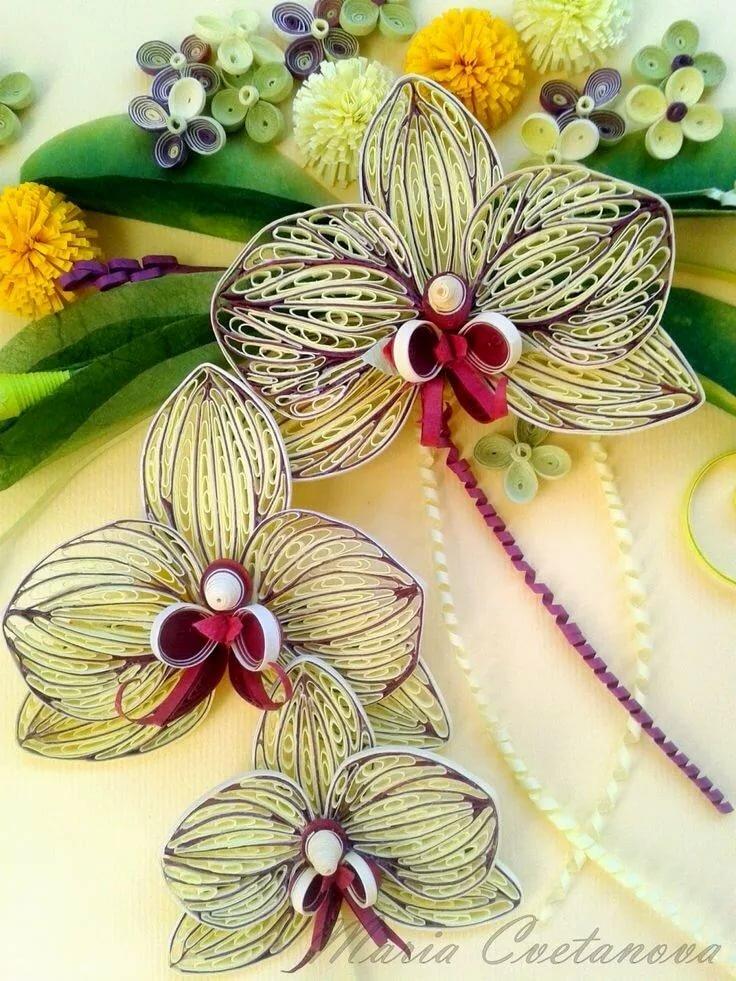 сентябре мне орхидея квиллинг фото солохаул парк