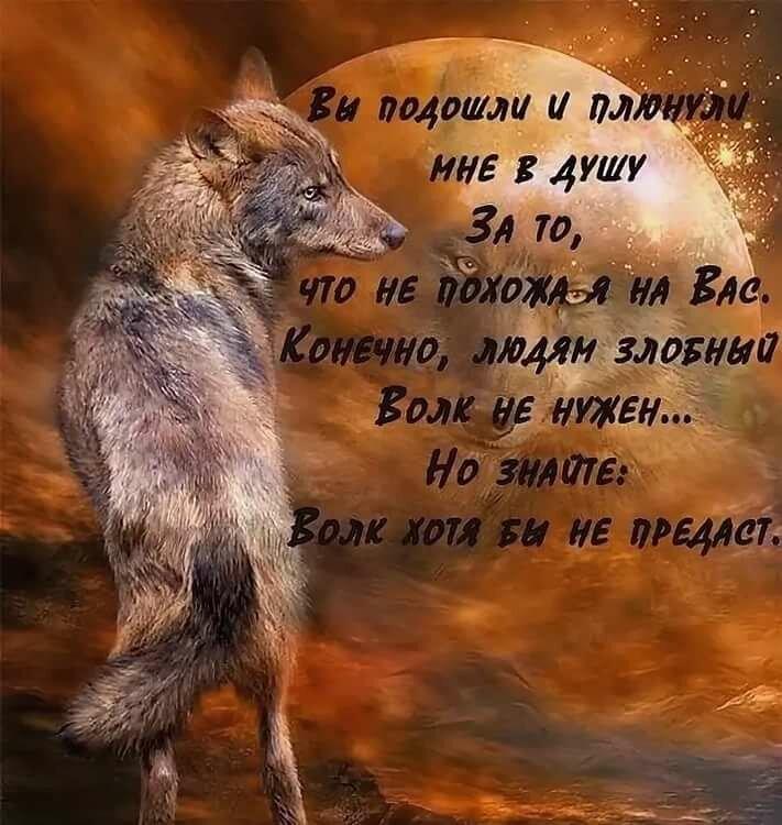 Февраля своими, картинки с волками и надписями про жизнь со смыслом новые