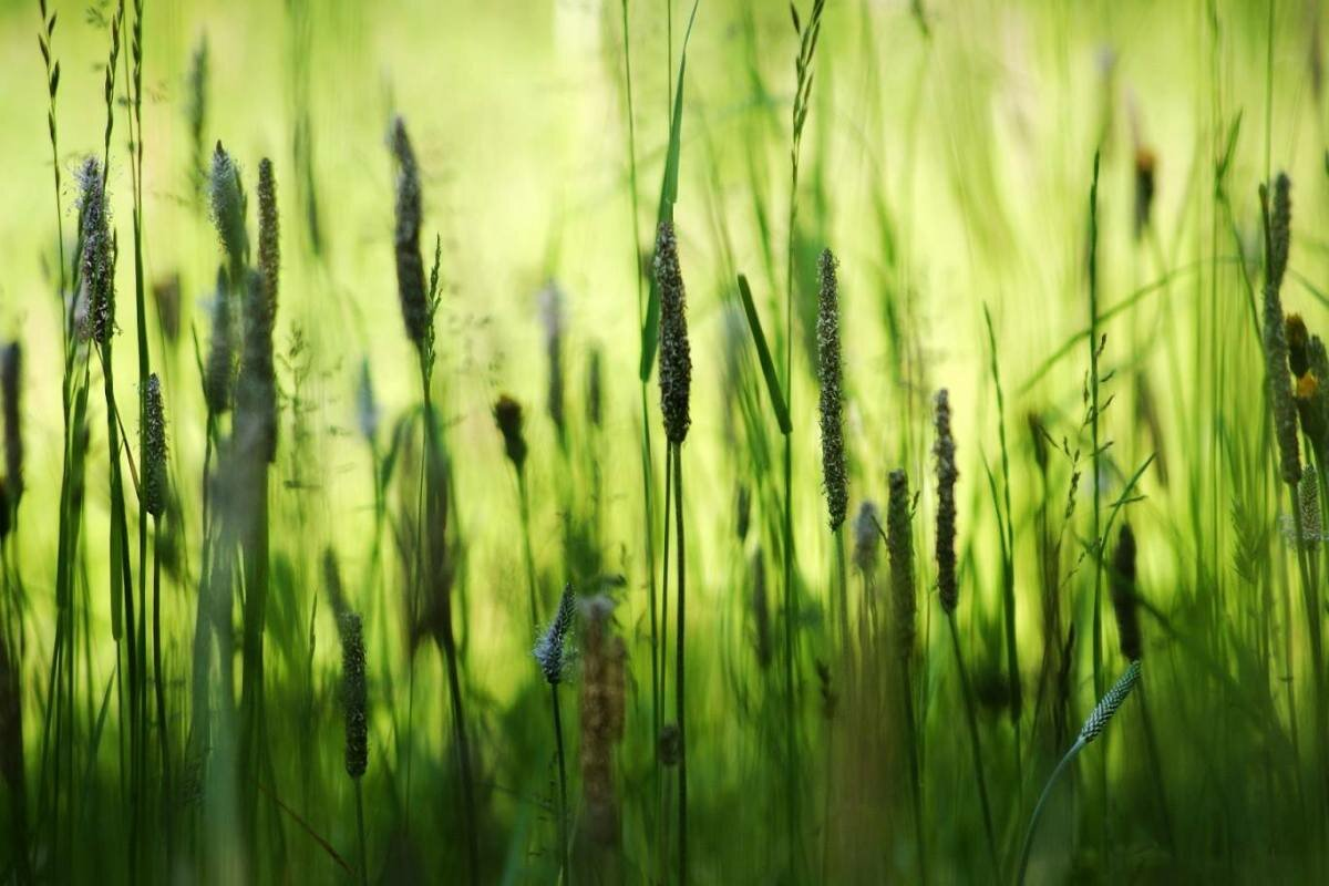 может трава мурава фото лучший подарок, которые