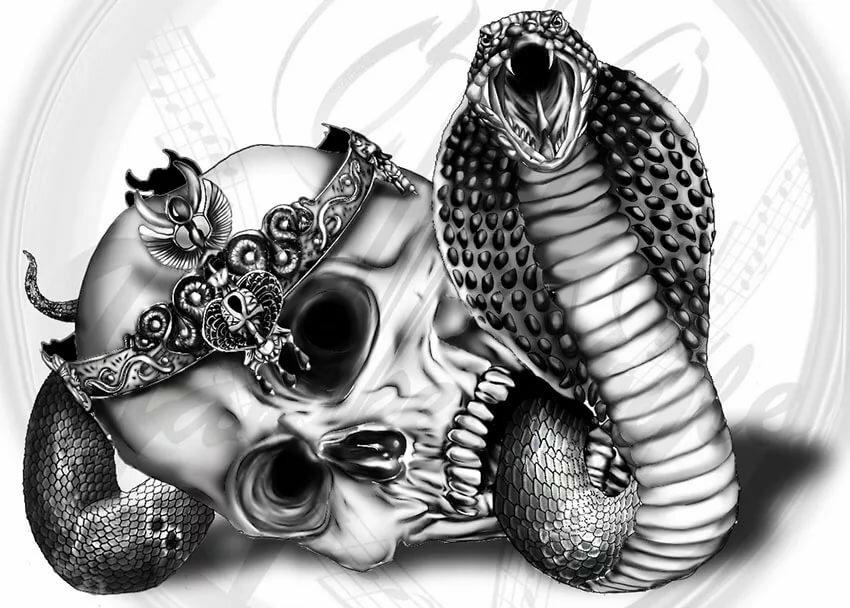 подчеркнул картинки змей карандашом в черепе определить
