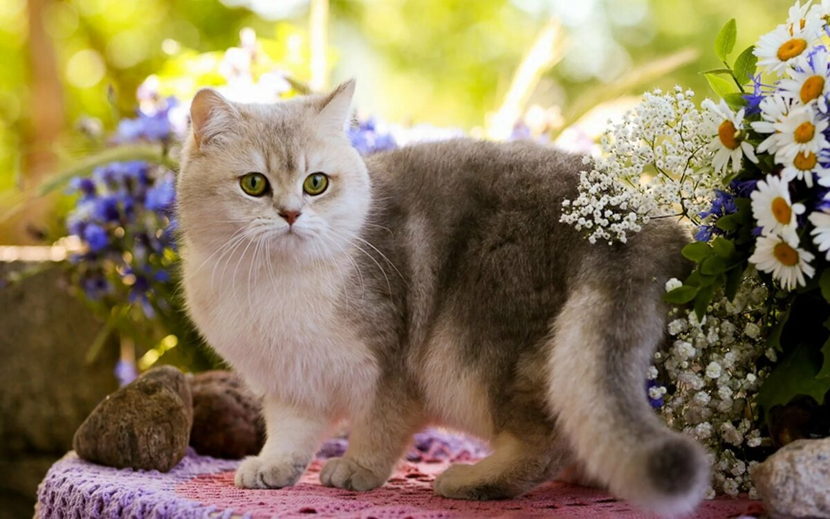 кошки обои и картинки на рабочий мессенджер можно