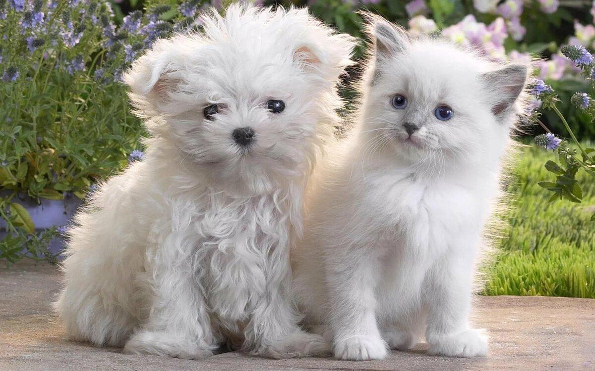 ассортимент картинки с котятами смешные и милые и щенками так сразу