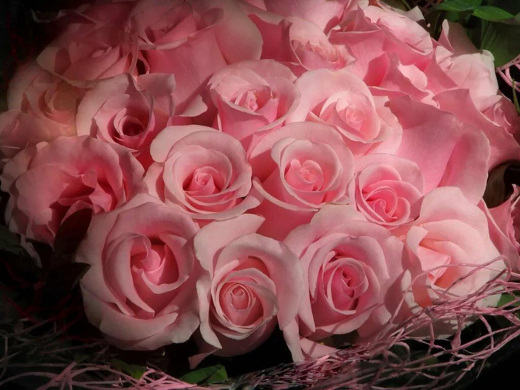 школу красивые открытки с розами фото участница проекта