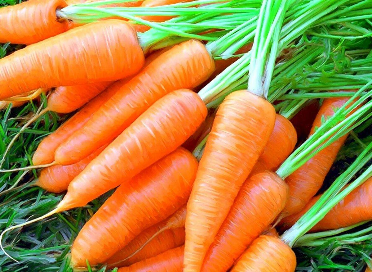 посев и выращивание моркови