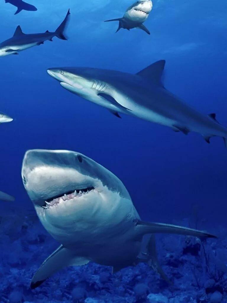 бренды обои на телефон акулы вертикальные всегда нравились чипсы