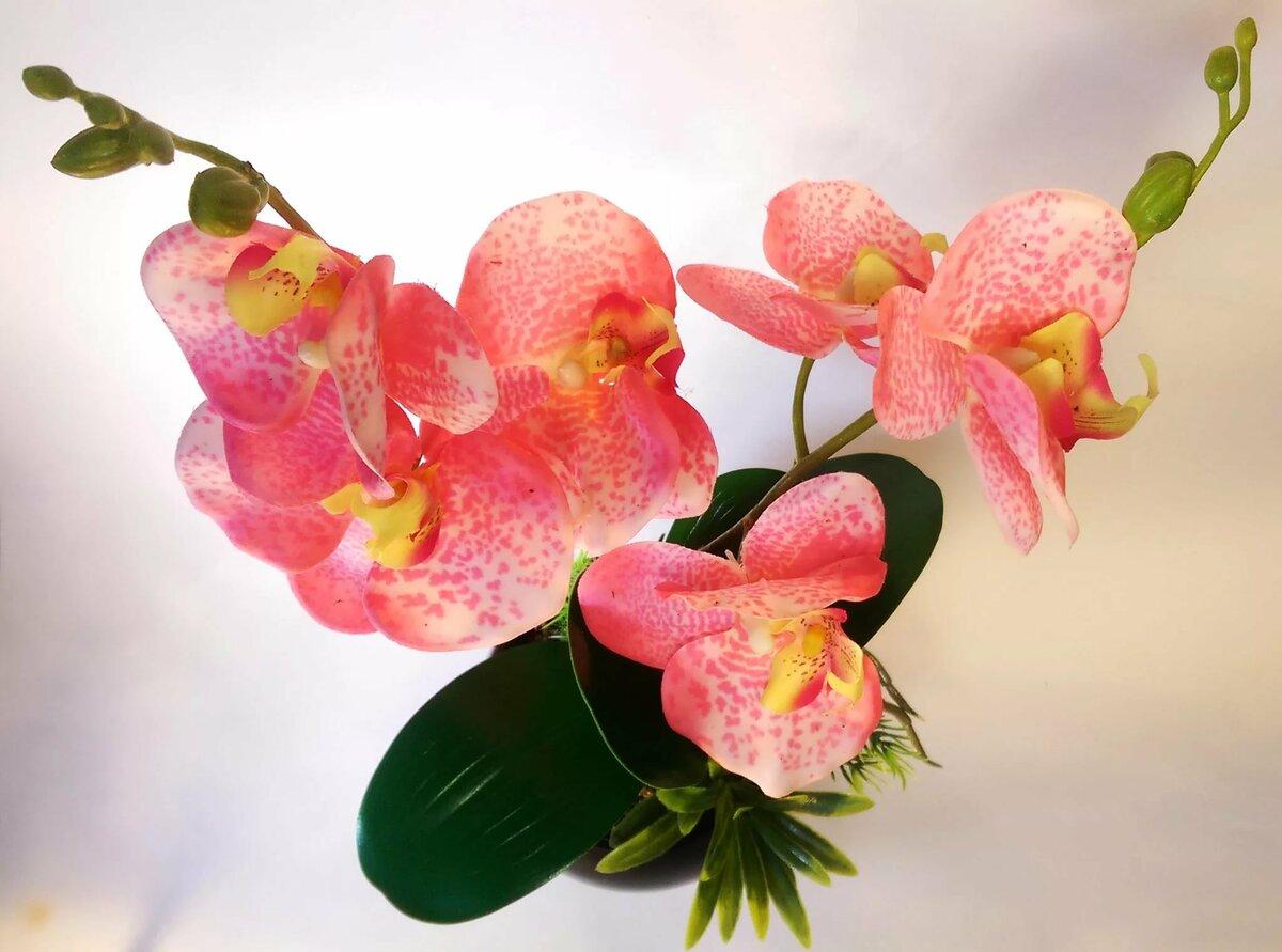 объявили орхидеи фото расцветки рисунке показано