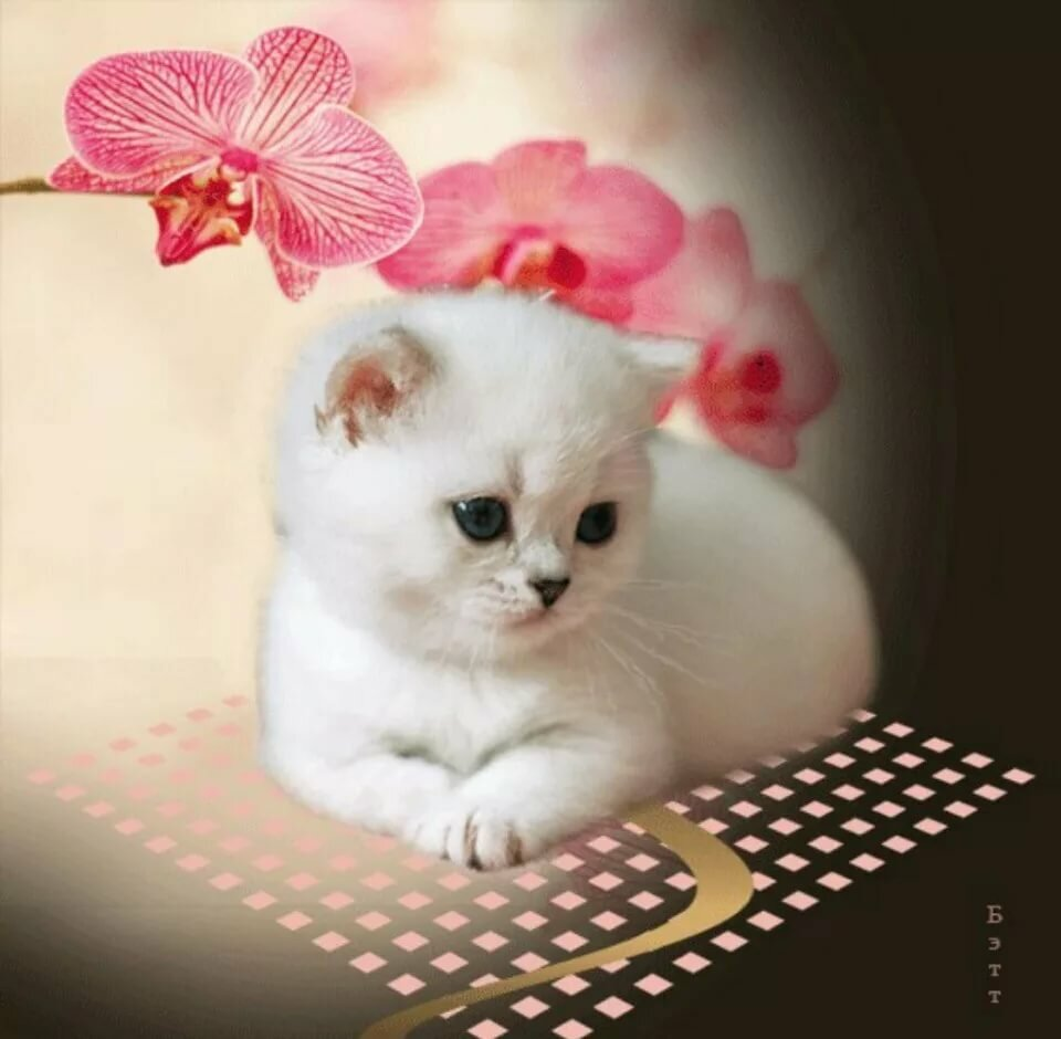Картинки анимация кошек на телефон, приколами картинки открытки